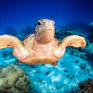 Great Barrier Reef Stay