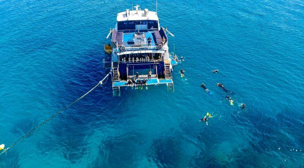 Snorkelling from Reef Experience