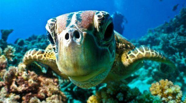Meet the turtles!